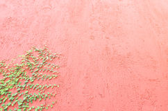 Closeup of Red wall partly covered with green plant Stock Images