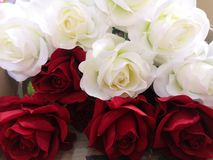 Red and white rose Love Valentine Day by handmade. Closeup red and white rose Love Valentine Day by handmade stock photography