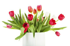 Closeup of red and white tulip bouquet Royalty Free Stock Images