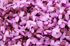 Closeup of Redbud Blossoms Stock Image