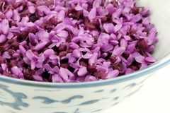 Closeup of Redbud Blossoms in a Porcelain Bowl. Loose redbud blossoms fill a porcelain bowl Royalty Free Stock Photography