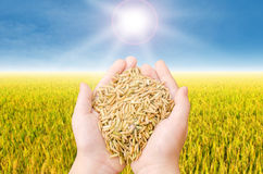 Closeup rice on child hand Royalty Free Stock Photography