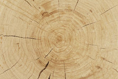 Fresh cut log Stock Images