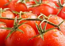 Closeup ripe cherry tomato's Stock Photos