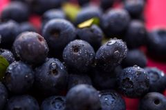 Closeup of ripe fresh blueberries with drops of water, macro shot. stock images
