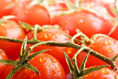Closeup ripe fresh cherry tomatos Stock Photography