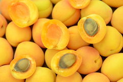 Closeup of ripe, juicy, delicious apricots Stock Photography