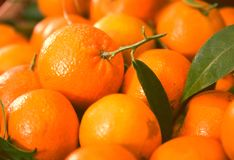 Closeup of ripe mandarins Stock Photos