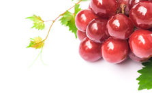 Closeup ripe red grape with leaf on white background, fruit heal Stock Image