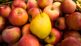 Closeup of ripe yellow pear lying on red apples in basket Royalty Free Stock Photo
