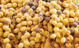 Closeup of ripen dates Royalty Free Stock Image