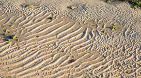Closeup of rippled sand with green seaweed Stock Image