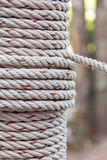 Closeup roll of rope Royalty Free Stock Image