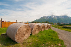 Closeup of rolled hay Stock Photography