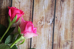 Closeup of rose Royalty Free Stock Image