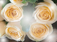 Closeup rose bouquet Royalty Free Stock Image
