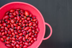 Closeup of rose-hip berries in red bow with black Royalty Free Stock Photo
