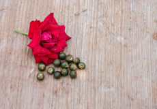 Closeup of rose and seed of palm Royalty Free Stock Images