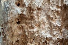 Closeup rotten wood stock photography