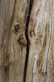 Closeup of a rotting tree. A closeup of a rotting tree. This is an old tree, all the cracks and openings in it are very suitable for all kinds of animals to live Royalty Free Stock Images