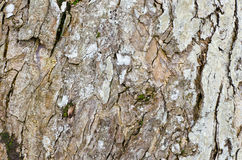 Closeup rough old tree surface for background Stock Photography