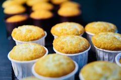 Closeup row of blueberry muffins. Oat and blueberry muffins in a muffin in baking paper stock photos
