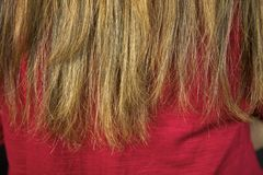 Closeup of ruined split ends hair ready to be cut Royalty Free Stock Image