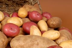 Closeup of russet, red and white potatoes spilling out of a bask Stock Image