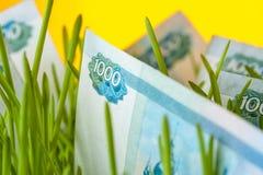 Closeup of russian ruble bill in green grass Stock Photo