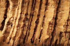 Closeup: rustic cork bark. Wooden relief. Royalty Free Stock Photos