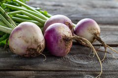 Closeup of rustic organic turnips for sustainable vegetarian farming. Closeup of rustic organic turnips with fresh green tops and roots on old wood background royalty free stock photo