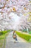 Closeup Sakura i trädgård royaltyfri fotografi