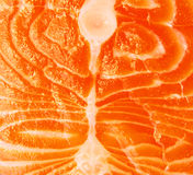 Closeup of salmon meat Royalty Free Stock Image