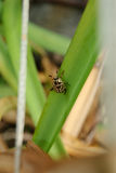 Closeup of Scarabaeidae bug on a green leaf Stock Photo