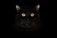 Closeup Scared Black Cat Face, Yellow Eyes in Dark Stock Photos