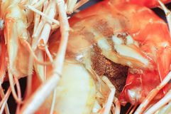 Closeup scene of bake shrimp this is favorite Thai style food fresh and nature nutrition cuisine delicious for your good health d. Aily serve ready to eat royalty free stock photos