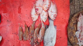 Closeup Sea Fish Common Squid on Red Plastic Mat on Ground stock footage