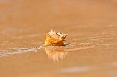 Closeup of a sea shell Royalty Free Stock Photo