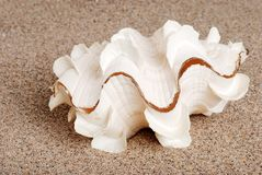 Closeup Sea Shell In The Sand Stock Photo