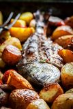 Seabream and potatoes with herbs and tomatoes. Closeup of seabream and potatoes with herbs and tomatoes stock photography