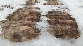 Closeup seafood market stock images