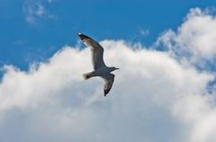 Closeup of a seagull flying over Aegean sea near mountain Athos Stock Photo