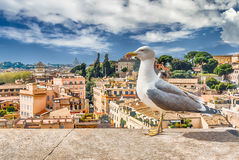 Closeup of a seagull with Rome city centre as background Stock Images
