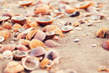Closeup of seashells on a sandy beach Royalty Free Stock Images