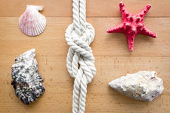 Closeup of seashells, starfish and knot from sailing travels Stock Image