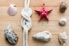 Closeup of seashells, starfish and marine knot lying on boards Royalty Free Stock Photo