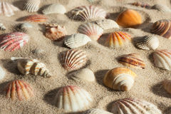 Closeup seashells sticking out of the sand in the sunlight Stock Photography