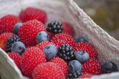 Closeup of red balloon berries or strawberry raspberry blueberries and blackberries Stock Images