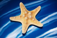 Closeup of a seastar blue background Royalty Free Stock Images