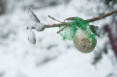 Seeds for birds on tree covered by snow. Closeup of seeds for birds on tree covered by snow Royalty Free Stock Photography